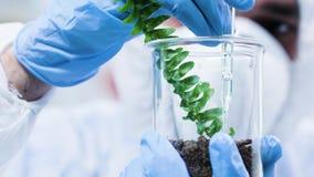 Hällande GMO på provväxter i modernt laboratorium arkivfilmer