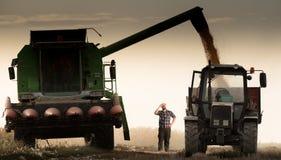 Hällande havrekorn in i traktorsläpet Royaltyfri Bild