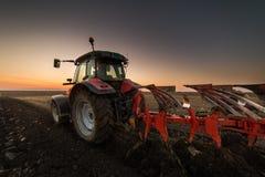 Hällande havrekorn in i traktorsläpet efter skörd Royaltyfri Foto