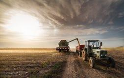 Hällande havrekorn in i traktorsläpet efter skörd Royaltyfri Bild