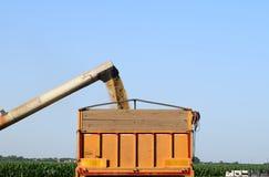 Hällande korn från unloaderen in i lastbilen, Vojvodina, Serbien royaltyfri fotografi