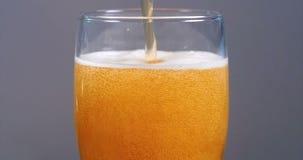 Hällande lageröl på ett halv literexponeringsglas, ultrarapid stock video