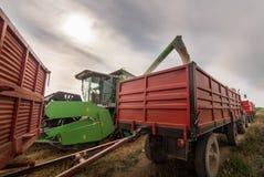 Hällande vetekorn in i traktorsläpet efter skörd Fotografering för Bildbyråer