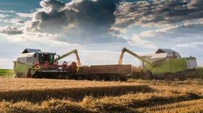 Hällande vetekorn in i traktorsläpet efter skörd Arkivfoton