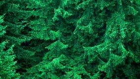 Hällregn på djupt sörjer trädskogen lager videofilmer