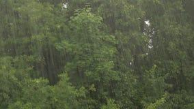Hällregn på en bakgrund av träd Lind, lönn och ek lager videofilmer