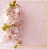 Hälsa det blom- kortet med körsbärsröda blommor Arkivbild