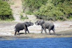 Hälsa för elefanter arkivbilder