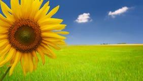 hälsningen säger solrosen arkivfoton