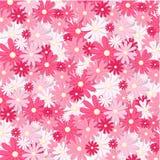 Hälsningkort för körsbärsröd plommon Rosa härlig bakgrund Royaltyfri Foto