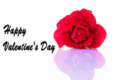 Hälsningkort för Valentine& x27; s-dag med en röd ros Arkivfoton