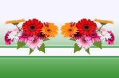 Hälsningkort med blommor Gerber Royaltyfri Foto