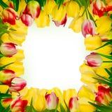 Hälsningkort med den färgrika blomman. EPS 10 Arkivbild