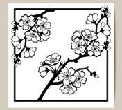 Hälsningkort med en filial av körsbärsröda blomningar Royaltyfri Bild
