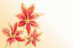 Hälsningkort med Lilly blommor Royaltyfri Foto