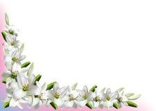 Hälsningkort med vita liljor Arkivbild