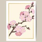 Hälsningkortet med en filial av rosa sakura blomstrar Arkivbilder