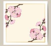 Hälsningkortet med en filial av rosa sakura blomstrar Royaltyfri Bild