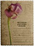 Hälsningskort med irisblomman Royaltyfria Bilder