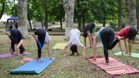 Hälsosamma kvinnor och män som gör övningar, folk övar yoga, konditionuppvärmning i utomhus-, yogagrupp utomhus lager videofilmer