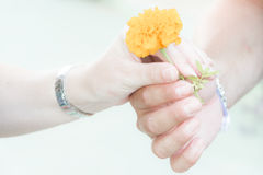 Händchenhalten mit einer Blume Lizenzfreies Stockfoto