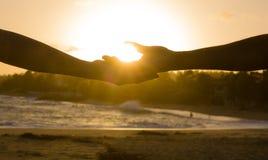 Hände bei Sonnenuntergang stockfotos