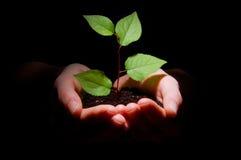 Hände beschmutzen und pflanzen das Zeigen des Wachstums lizenzfreie stockbilder