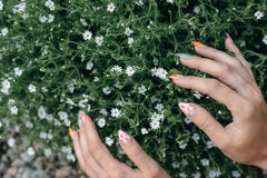Hände in den Blumen Stockfotografie