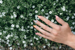 Hände in den Blumen Lizenzfreies Stockfoto