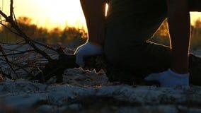 Hände in den Handschuhen versuchen, einen Baumast bei Sonnenuntergang zu brechen stock video