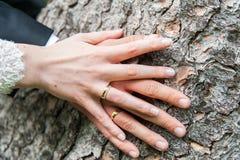Hände der Braut und des Bräutigams auf Baumstamm lizenzfreie stockfotos