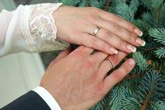 Hände der Braut und des Bräutigams in den Eheringen Stockbilder
