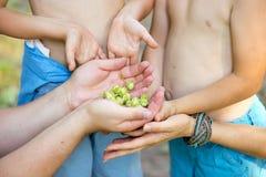Hände der Familie mit grünen Haselnüssen Lizenzfreies Stockbild