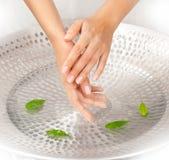 Hände der Frau mit grünen Blättern Stockfotos
