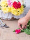 Hände der Person Blume halten Stockfoto