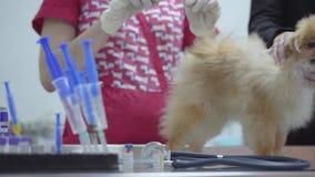 Hände der unerkennbaren Krankenschwester im bunten medizinischen Kleid, das Einspritzungsschutzimpfung unter Verwendung des klein stock footage