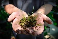 Hände des jungen Mannes, die eine grüne Jungpflanze halten Viele mehr Ökologiebilder in meinem Portefeuille Stockbilder