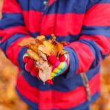 Hände des Kindes Herbstlaub halten Stockbilder