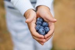 Hände des Kindes mit reifen Blaubeeren Lizenzfreie Stockfotografie