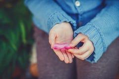 Hände des kleinen Mädchens rosa Blumenblatt der Tulpe halten stockbild