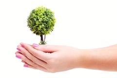 Hände, die Anlage anhalten Lizenzfreie Stockfotos