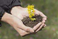Hände, die Blume anhalten Stockbilder