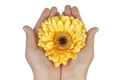 Hände, die Blume anhalten Lizenzfreie Stockfotografie