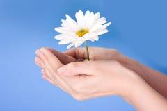 Hände, die Blume anhalten lizenzfreie stockfotos