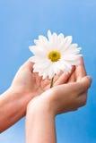 Hände, die Blume anhalten stockfotos