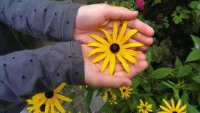Hände, die Blume anhalten Stockbild