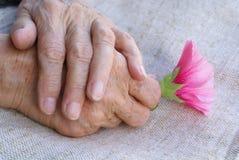 Hände, die Blume anhalten lizenzfreies stockbild
