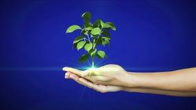 Hände, die das digitale Grünpflanzewachsen darstellen Stockbild