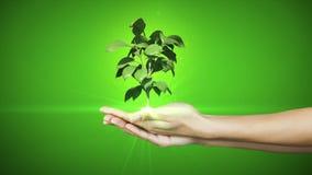 Hände, die das digitale Grünpflanzewachsen darstellen Stockfoto