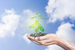 Hände, die den Wachstumsbaum mit Himmel- und Wolkenhintergrund halten lizenzfreie stockfotografie
